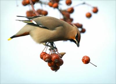 sparrow resized