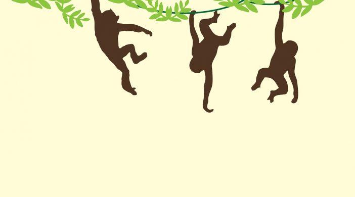 monkeys-909278_1280